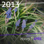 Honey T - April